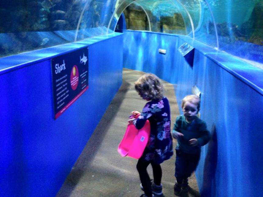 Undersea Tunnel - Blue Reef Aquarium Hastings - Review - A Whole Latte Love Blog