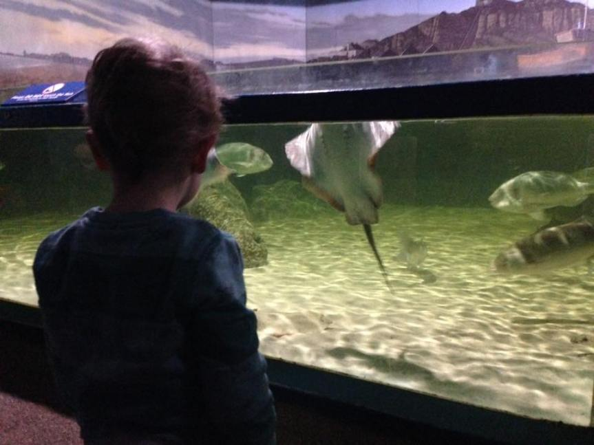 Rays - Blue Reef Aquarium Hastings - Review - A Whole Latte Love Blog