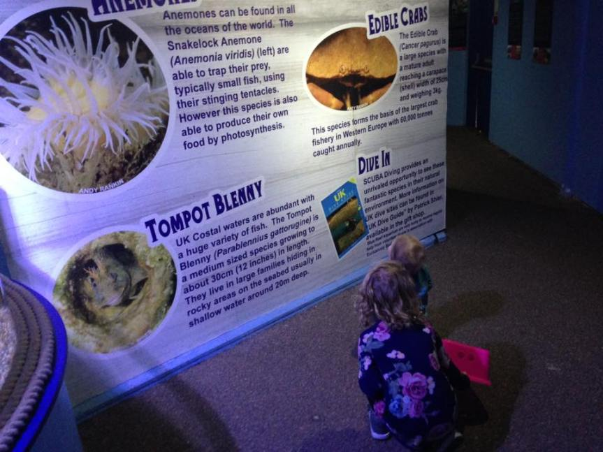 Inside - Blue Reef Aquarium Hastings - Review - A Whole Latte Love Blog