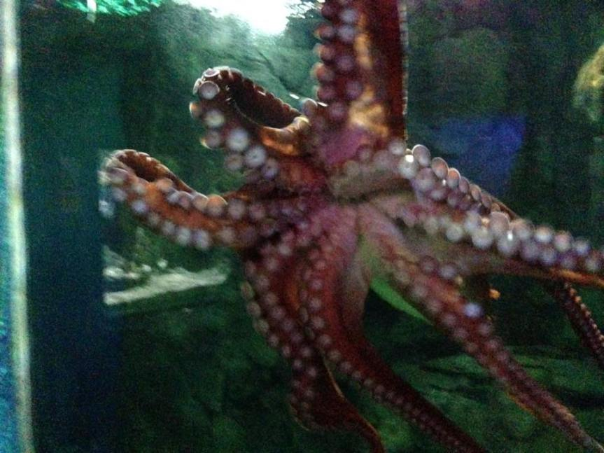 Octopus - Blue Reef Aquarium Hastings - Review - A Whole Latte Love Blog