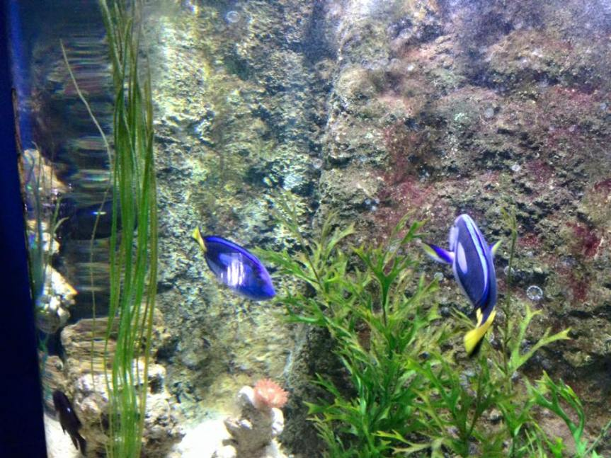Fish - Blue Reef Aquarium Hastings - Review - A Whole Latte Love Blog